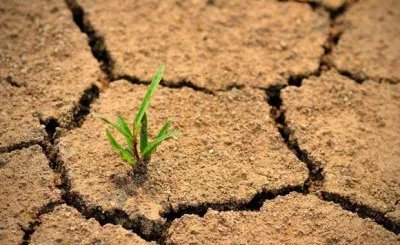 Green shoots growing through dry land
